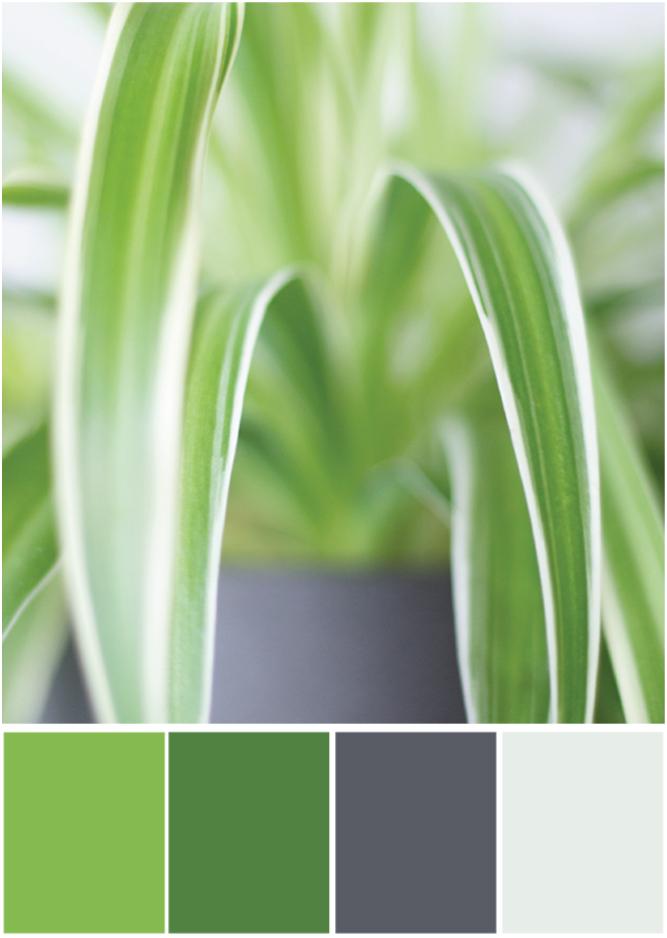 Farbpalette Grün-grau - Tweed & Greet