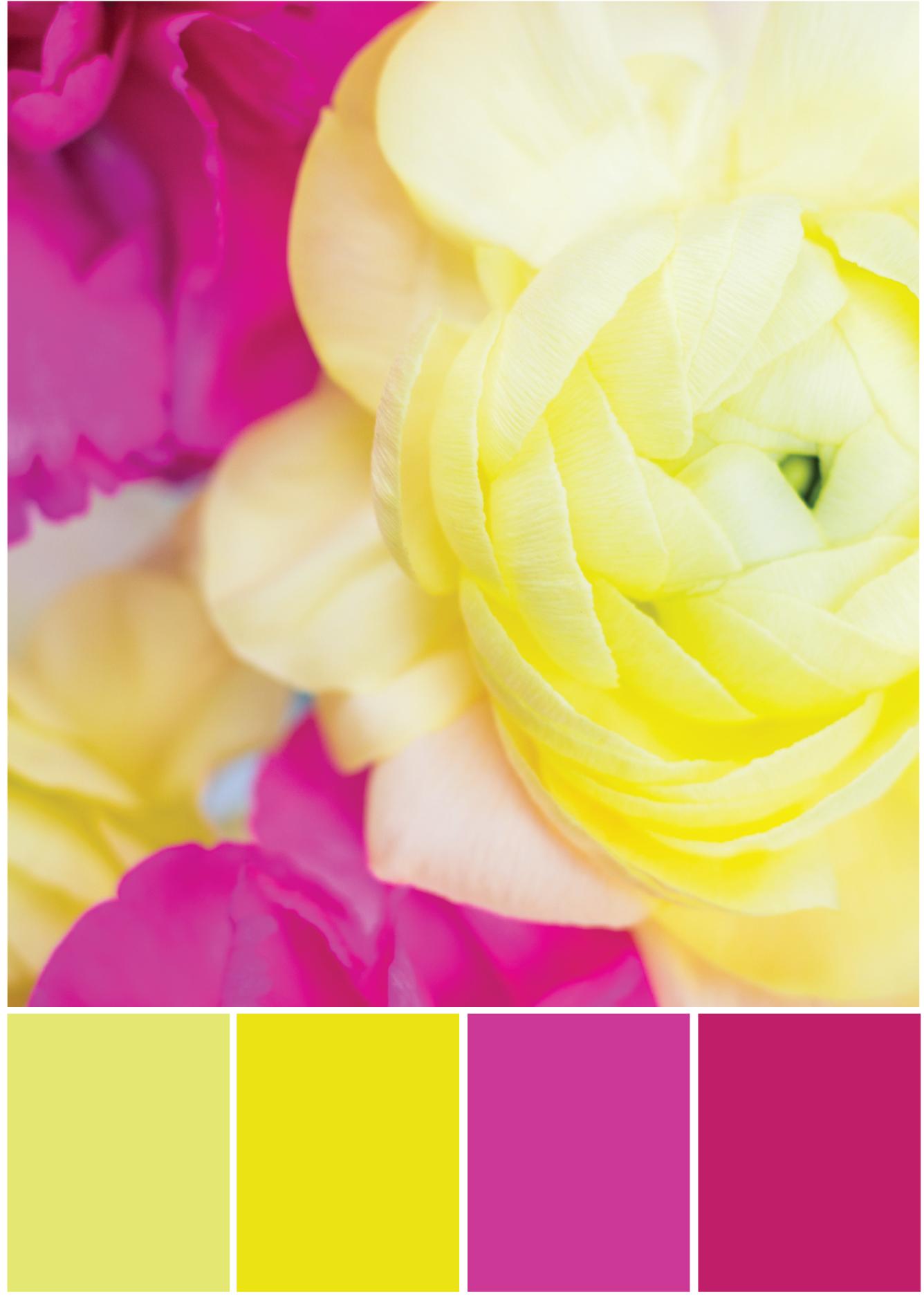 Gelb Pinke Farbpalette - Tweed & Greet
