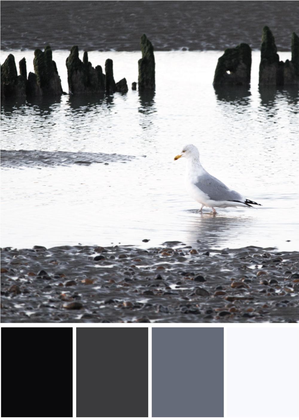 Schwarze Farbpalette - Tweed & Greet