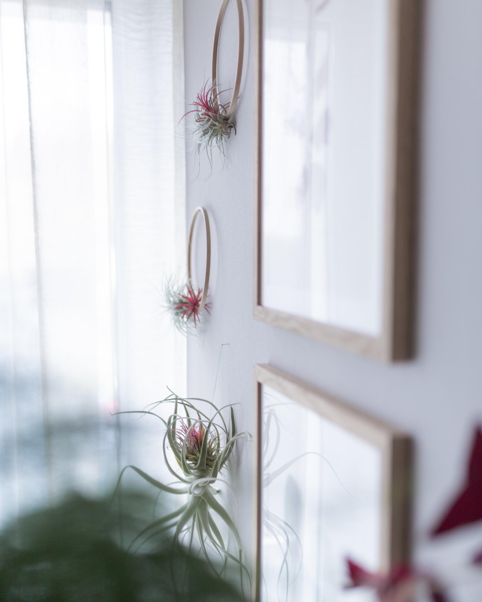 Tillandsien Wandschmuck DIY mit Stickrahmen